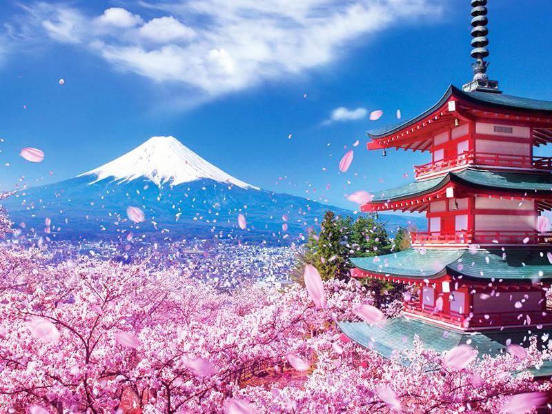Những Nơi Ngắm Hoa Đẹp Trên Đất Nước Nhật Bản