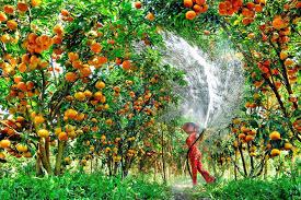 Tuyển dụng XKLĐ tại Nhật Bản - ngành nông nghiệp tháng 5